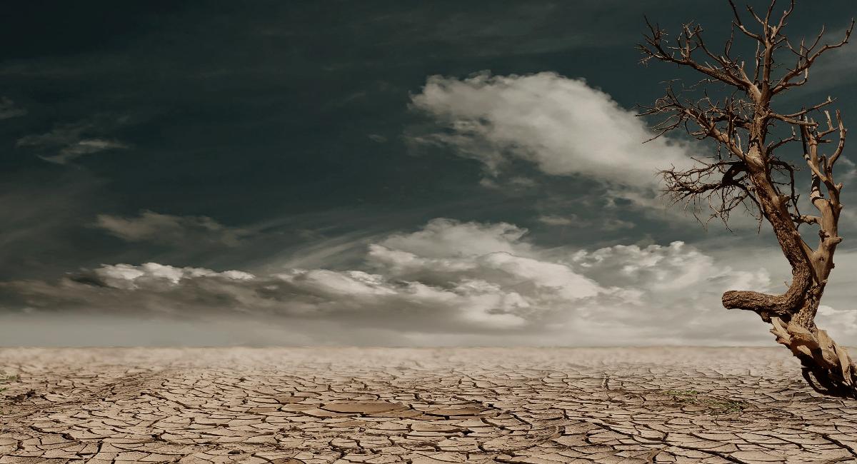 Nel deserto devi sapere come sopravvivere, la teoria non basta!